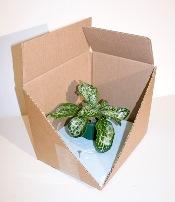demenagement carton plantes